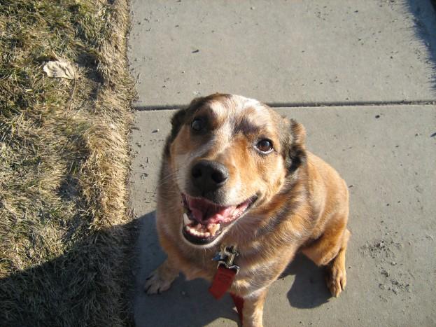 Joey the Wonderdog gets a walk