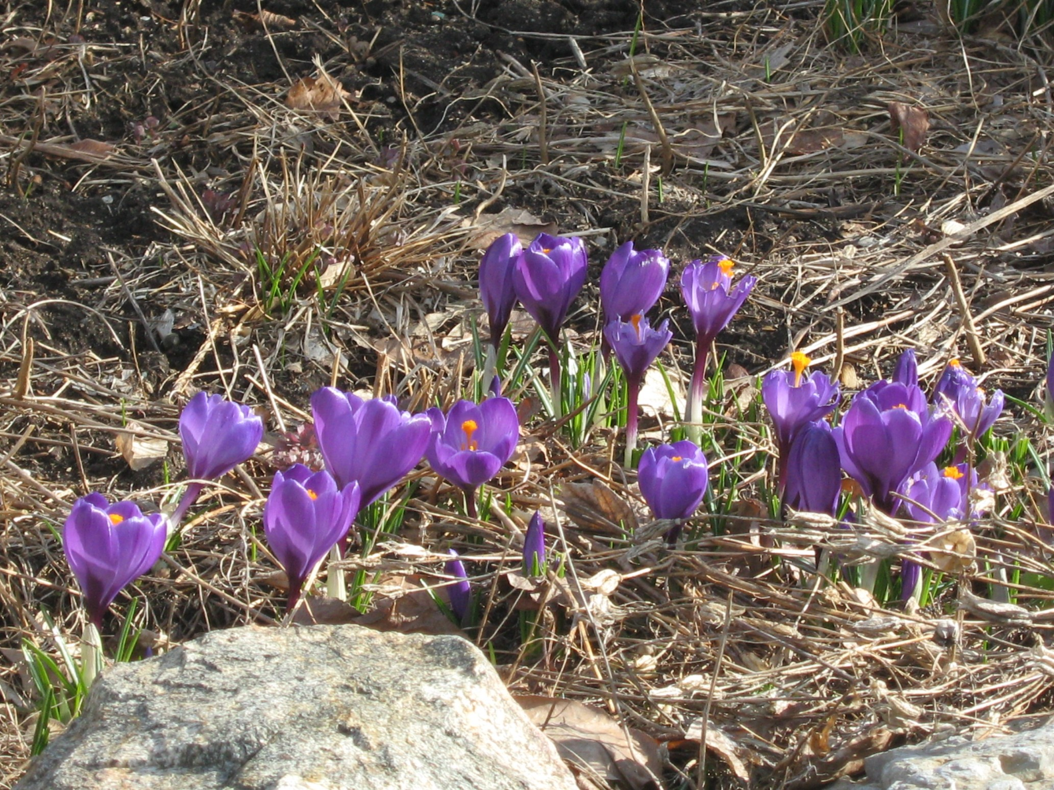 Crocus Convention