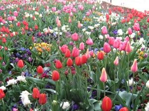 LDS Temple Springtime Garden