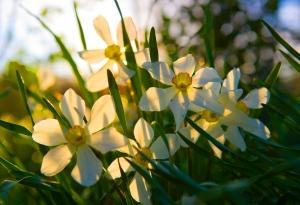 springtime-new life