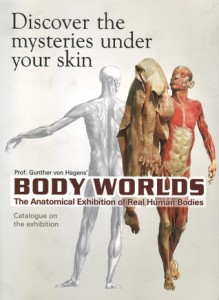 BODYWORLDS-anatomical-exhibition