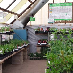 The Herb Greenhouse smelled amazing!