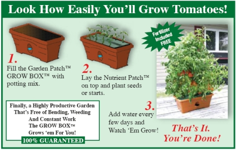 how_to_grow_tomatoes