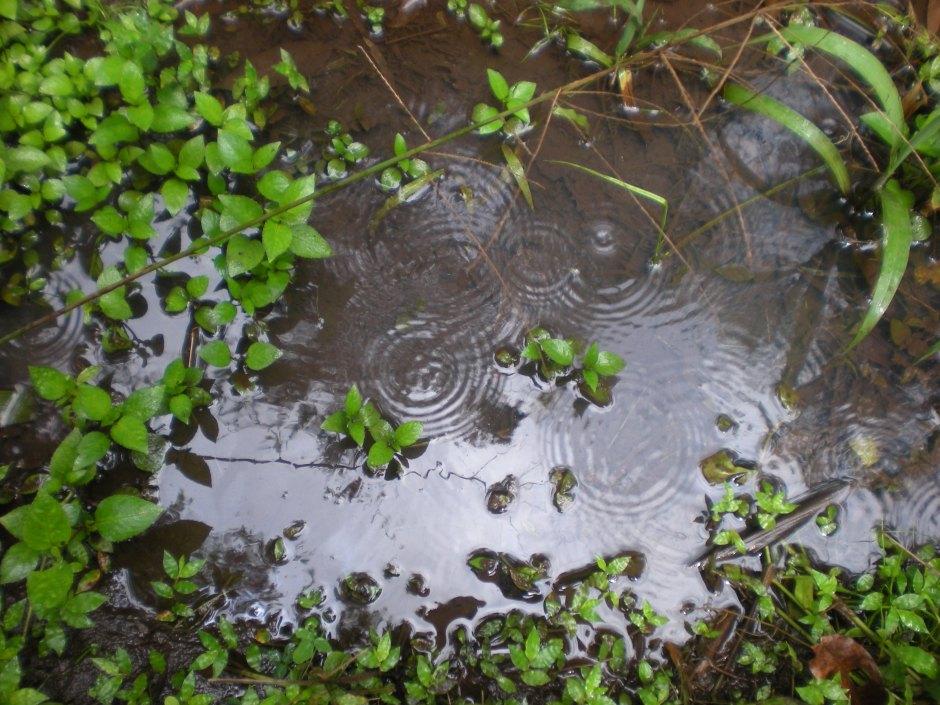 raininggardening