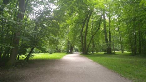 Englischer Garten trees
