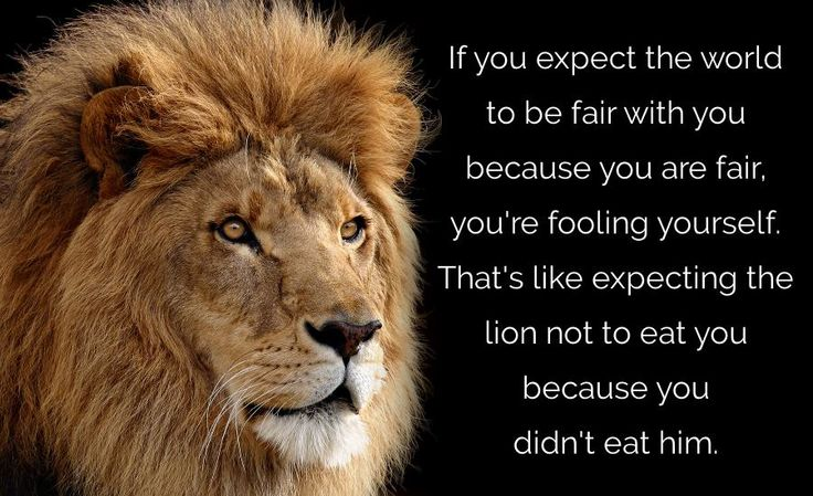 the-lion-not-eating-you