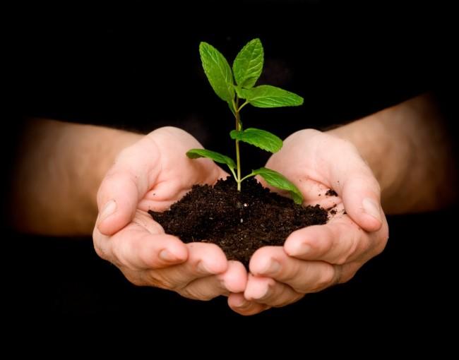 nourishing-tender-plant