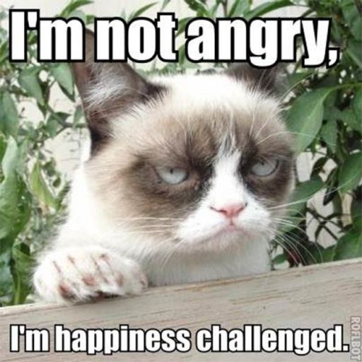 grumpy-cat (7)