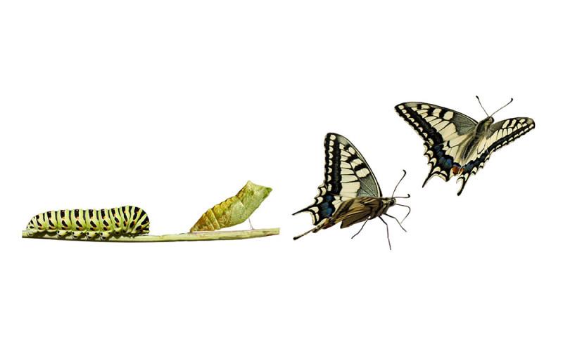 change-butterfly