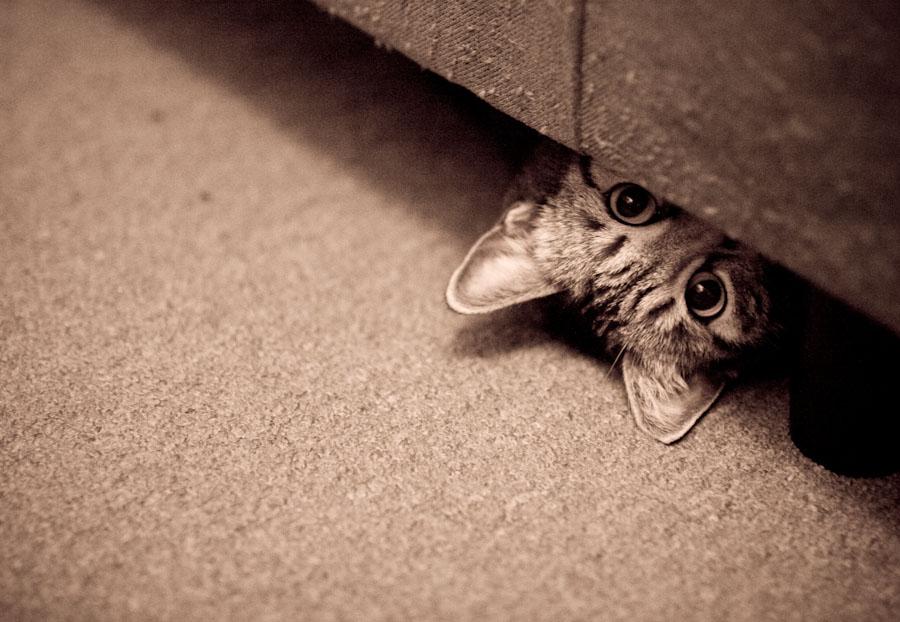 peek-a-boo-cat