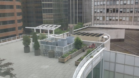 Rooftop garden at the Marriott Hotel