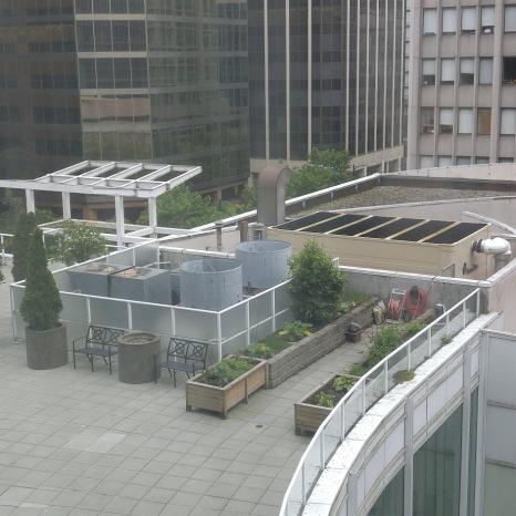 Rooftop garden at the Marriott Hotel